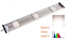 Cluster LED Neutral White