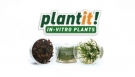 plant-it! In-Vitro Plants