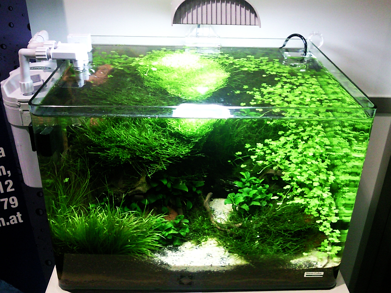aquascaping bing aquascaping aquaponics aquaponics aquariums ...