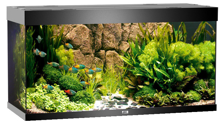 juwel aquarium rio 300 schwarz. Black Bedroom Furniture Sets. Home Design Ideas