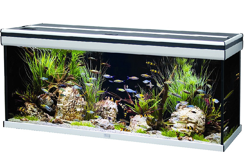 Is this a good aquarium to buy my aquarium club for Aquarium aquatlantis